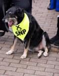 Dog with SNP neckerchief